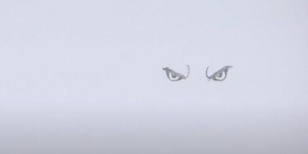 Как нарисовать волка: Нарисуйте глаза