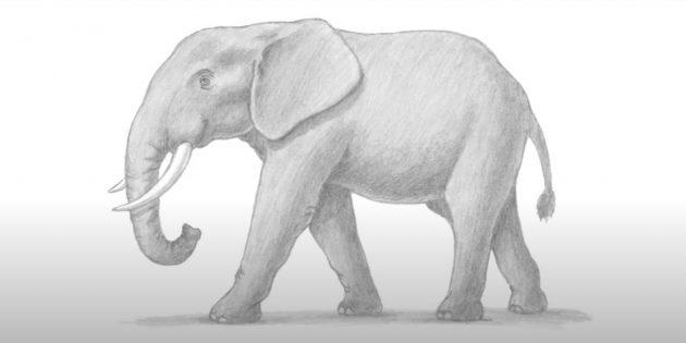 Как нарисовать реалистичного стоящего слона: готовый рисунок