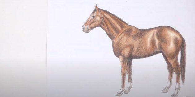 Стоящая реалистичная лошадь