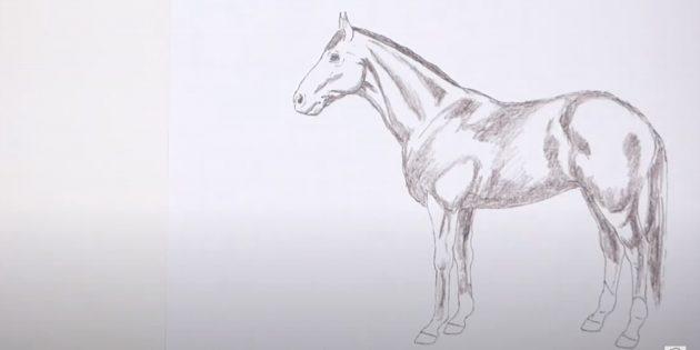 Как нарисовать лошадь: Обозначьте тени и мышцы
