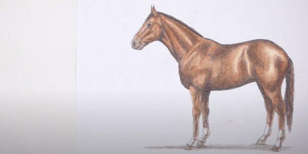Сделайте лошадь ярче