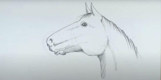 Как нарисовать лошадь: Нарисуйте гриву