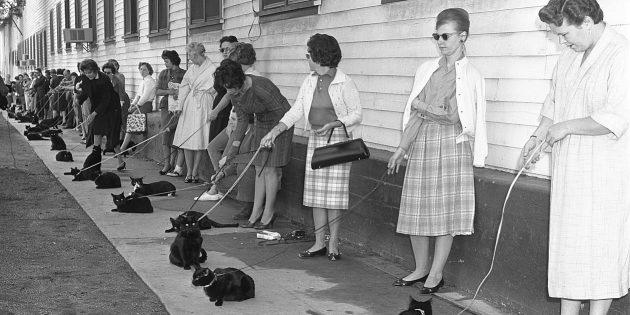 Кастинг чёрных кошек на роль в фильме Роджера Кормана «Истории ужаса»