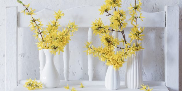 Как встретить День весеннего равноденствия: ветки форзиции в вазе