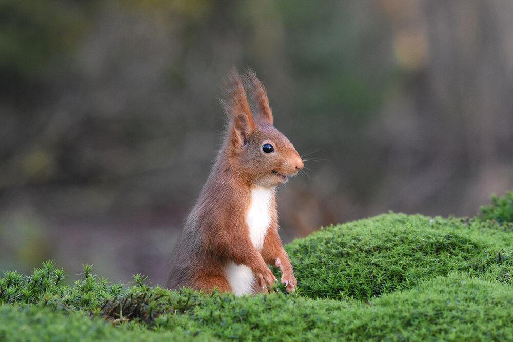 Лучшие снимки дикой природы с конкурса World Nature Photography Awards