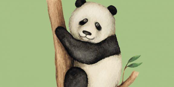 Как нарисовать панду. 21 несложный способ
