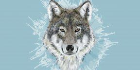 Как нарисовать волка: 21 простой способ