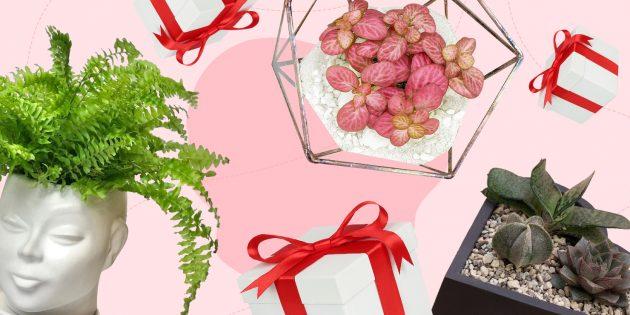 Идеи подарков: живые растения