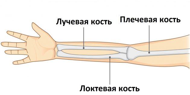 При переломе руки травмируется одна из трёх её костей
