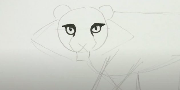 Как нарисовать тигра: Обведите фломастером глаза