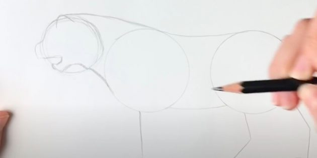 Как нарисовать тигра: Набросайте контур морды