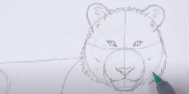 Как нарисовать тигра: Добавьте шерсти на морду