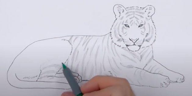 Как нарисовать тигра: Покройте тигра полосами