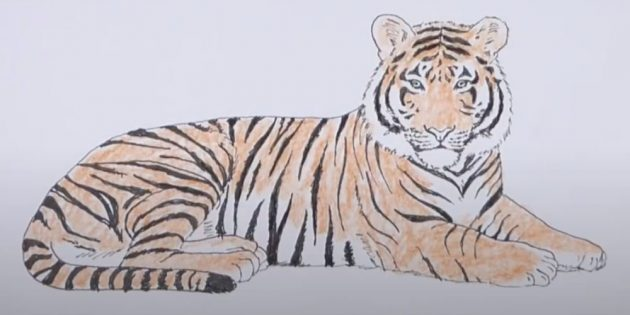 Затонируйте тигра оранжевым карандашом