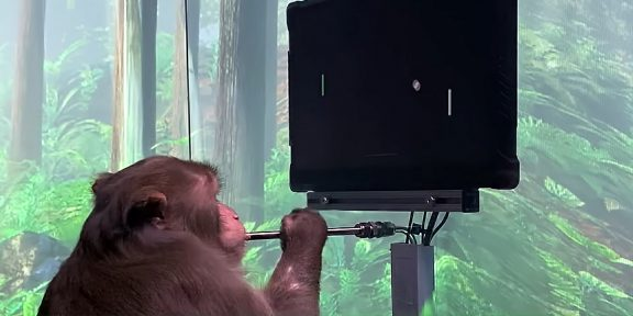 Neuralink Илона Маска показала видео с обезьяной, которая играет в видеоигру силой мысли