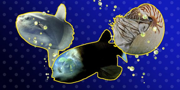 ТЕСТ: «Кто проживает на дне океана?» Пройдите проверку на знание глубоководных обитателей!