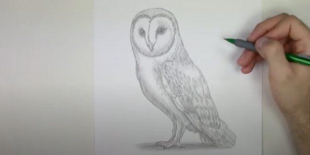Рисунок реалистичной совы карандашом