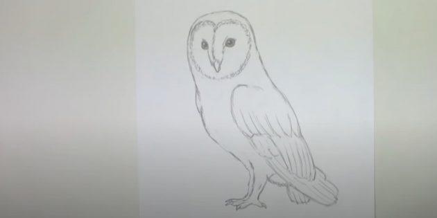Как нарисовать сову: сделайте грудь выпуклой и сотрите набросок