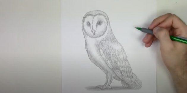 Как нарисовать сову: добавьте мелкие детали