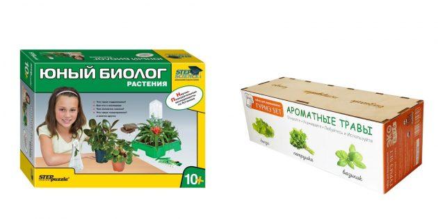 Что подарить девочке на 10лет: набор для выращивания растений