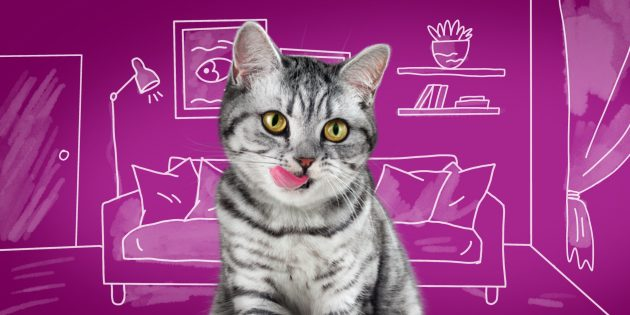 Уход за пожилой кошкой: обратите внимание на игривость и активность