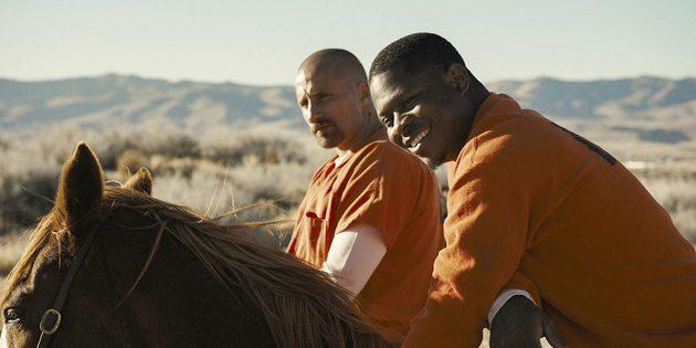 Кадр из фильма про лошадей «Мустанг»