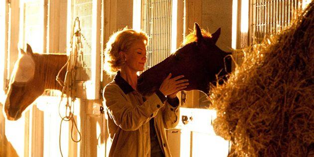 Кадр из фильма про лошадей «Чемпион»