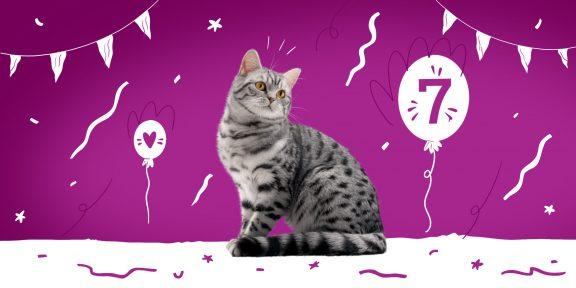 6 вещей, на которые надо обращать внимание владельцам кошек старше 7 лет