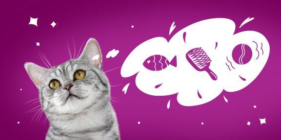 Как ухаживать за пожилой кошкой: советы для ответственных хозяев
