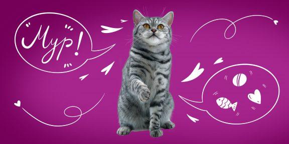 Кандидат пушистых наук или котовед-теоретик? Пройдите тест про котиков и узнайте, кто вы!