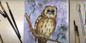 Как нарисовать сову: 21 несложный способ