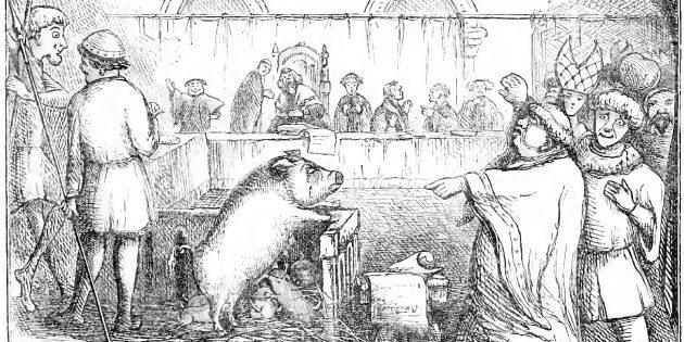 Свинью и её поросят судят за убийство ребёнка. Иллюстрация из «Дневной книги Чемберса»