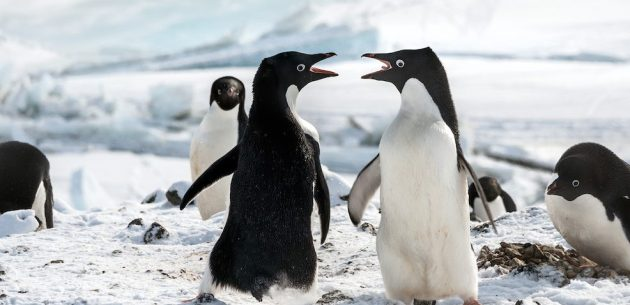 Фильмы про пингвинов: «Пингвины»