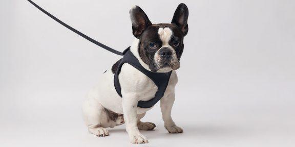 Штука дня: Tomo — минималистичный поводок для собак