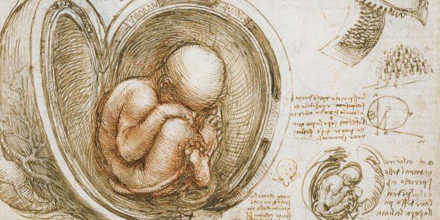 Плод в утробе матери, рисунок Леонардо да Винчи