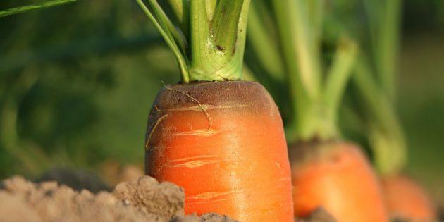 Огород на подоконнике: морковь