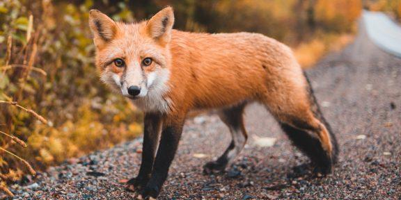 Учёные называют передачу COVID-19 от человека к животным серьёзной опасностью