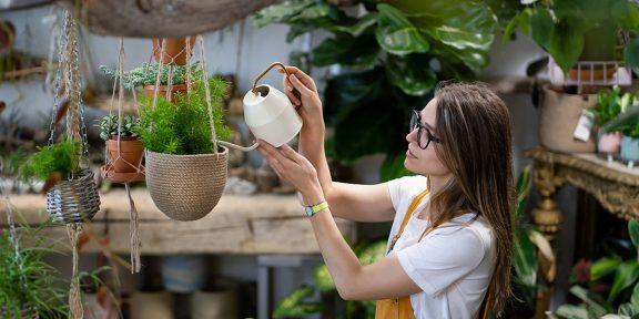 Что такое концепция Urban Jungle и как с её помощью выращивать растения