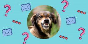 Как действовать, если укусила собака?