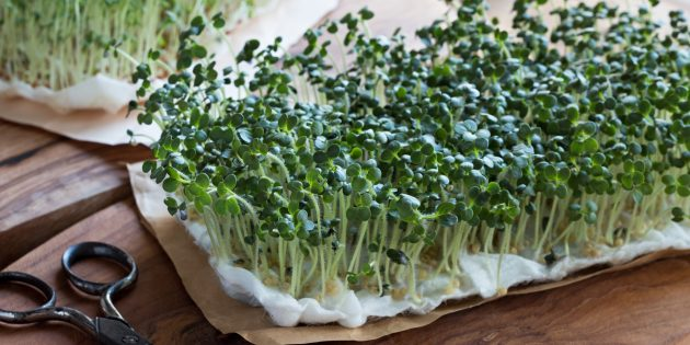 Как вырастить микрозелень на бумажных полотенцах