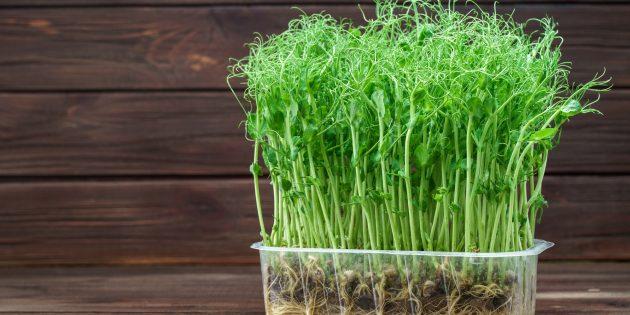 Как вырастить микрозелень на субстрате