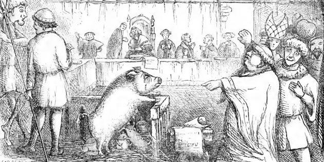 Суды над животными