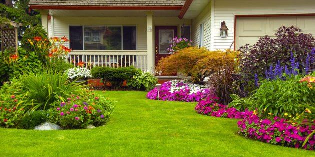 Дачные лайфхаки: посадите многолетние цветы и травы