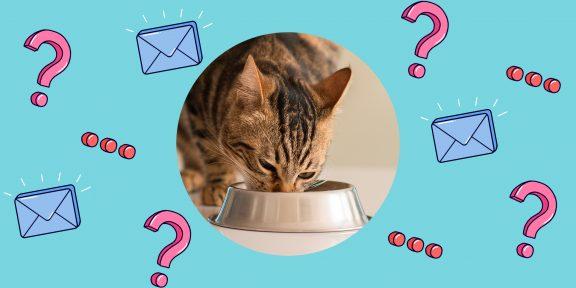 Надо ли чередовать сухой и влажный корм при кормлении кошки?