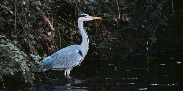 Выживание в дикой природе: чтобы найти воду, не стоит идти за птицами