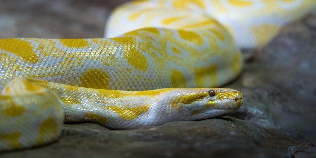 12 популярных мифов о змеях, в которые явно не стоит верить