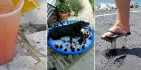 Как выглядит настоящая жара: 15фото от пользователей Сети