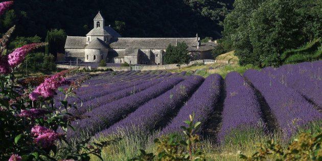 Мифы о средневековых замках: аббатство Сенанк, Воклюз, Франция