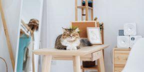 Как снять квартиру, если у вас есть животное