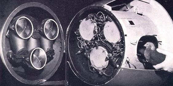 Американцы разрабатывали авиабомбы с голубиным наведением